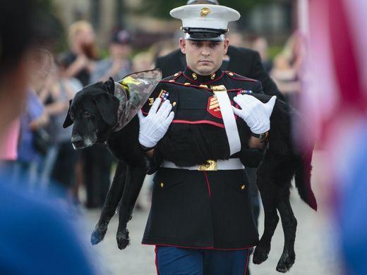 Marine dog with bone cancer says final goodbye